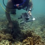 Scientist collecting spectral data from coral using a spectrometer