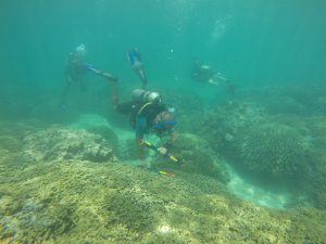 divers lay down survey markers to study a coral reef