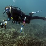 A diver conducts a benthic survey on a reef in Maui