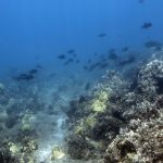 A scenic underwater view of Maui's reefs