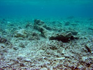 a degraded reef with little coral and no fish