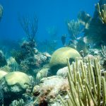 A coral reef in Bermuda with hard and soft corals