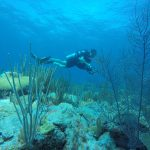 A diver conducts an underwater benthic assessment on a coral reef