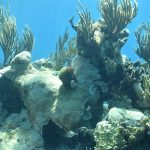 hard and soft corals