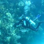 A diver takes photographs during a reef survey