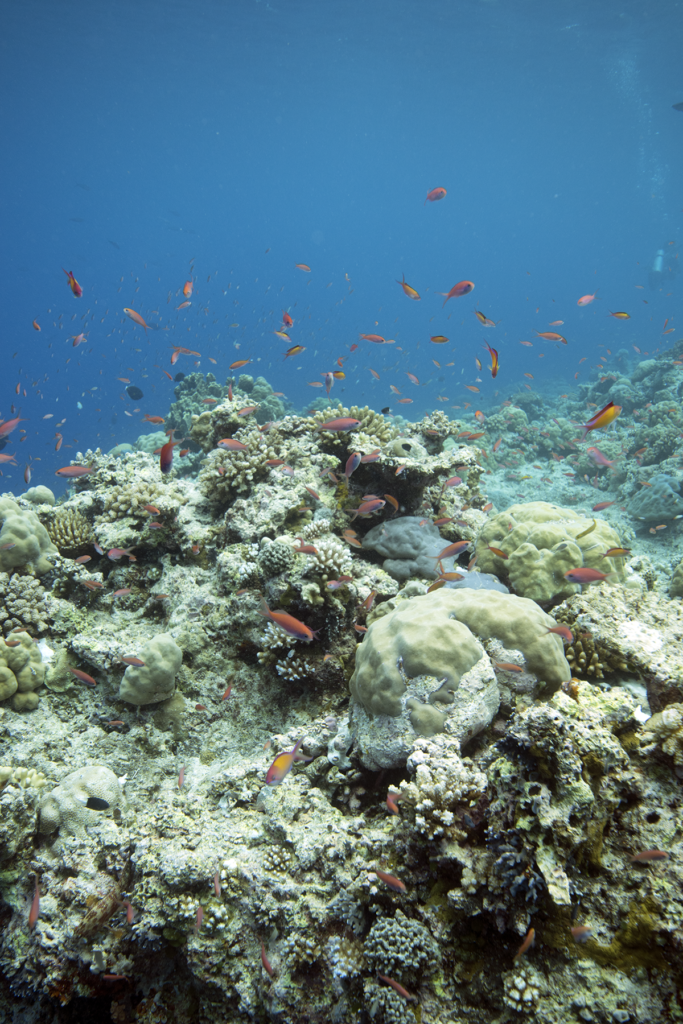 A reef with fish in Palau