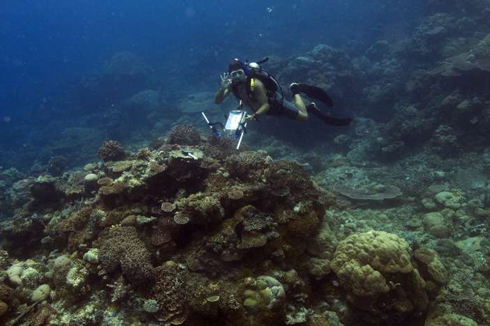 Diver on a reef in Palau after taking measurements